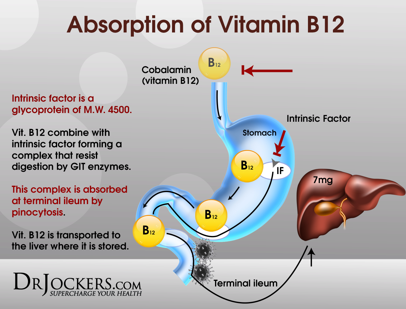 vitamin b12 and folate relationship quiz