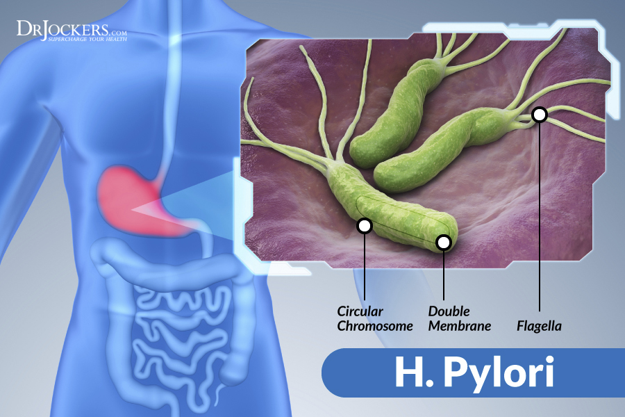 The Damaging Effects Of H Pylori Infections Drjockers Com