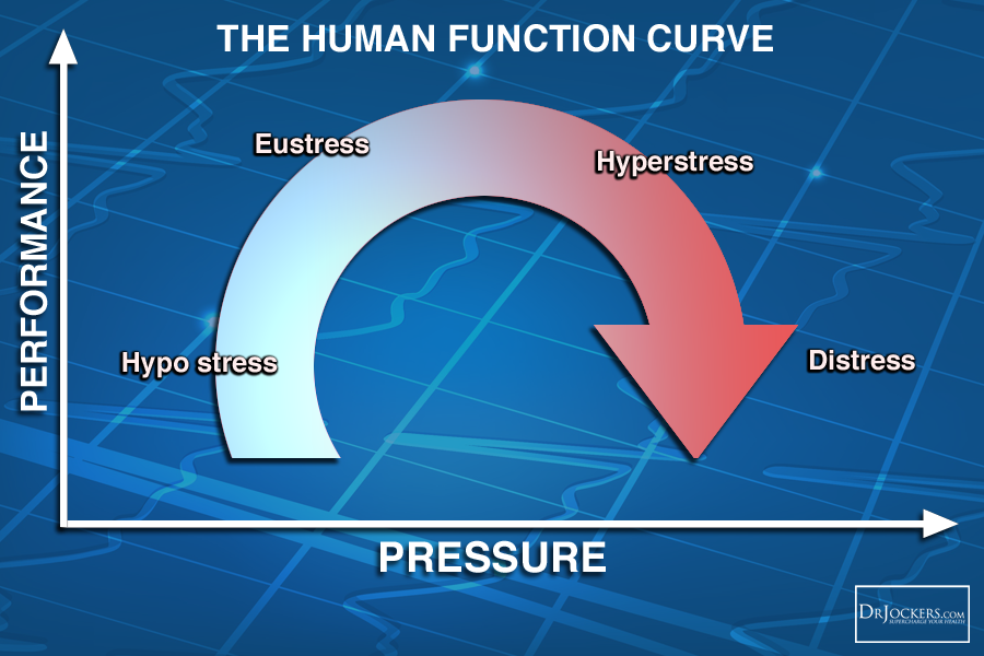 Thrive_HumanFunction