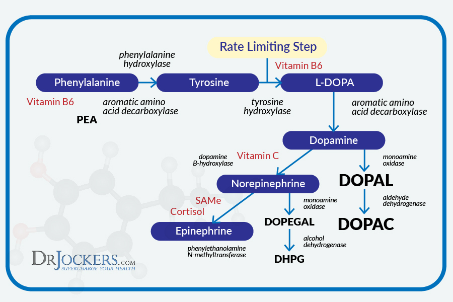 how to raise your dopamine levels
