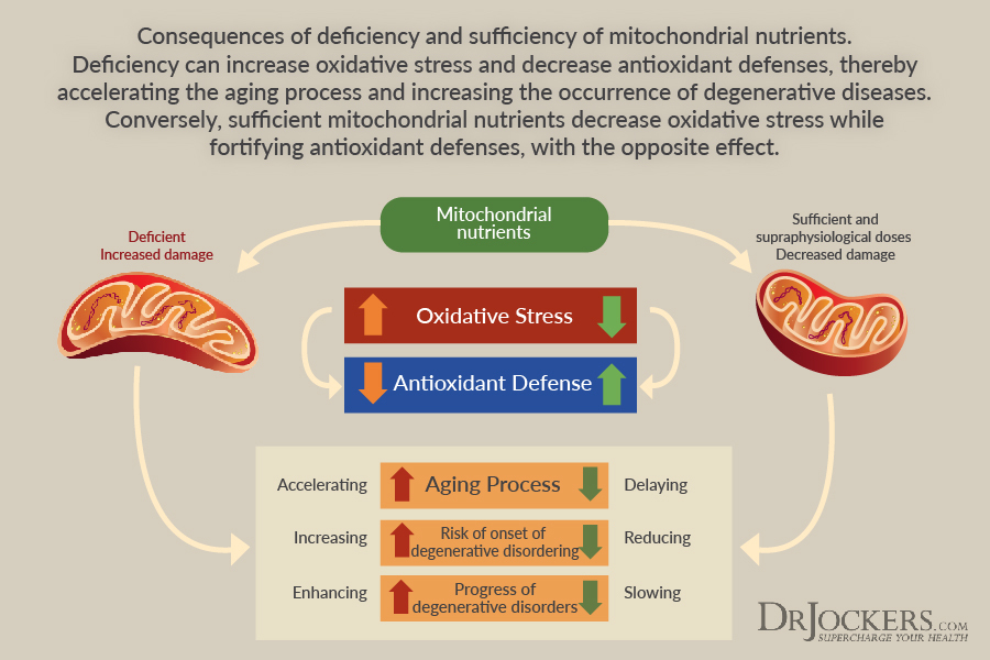 Mitochondrial, Mitochondrial Dysfunction and Chronic Disease