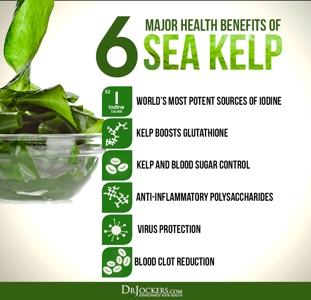 kelp, 6 Major Health Benefits of Sea Kelp