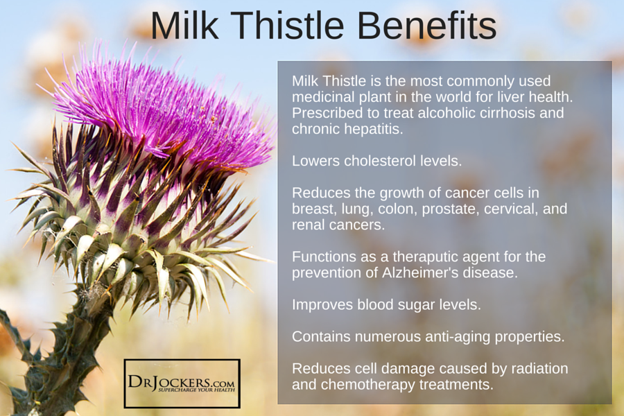 milk thistle 6 amazing health benefits. Black Bedroom Furniture Sets. Home Design Ideas