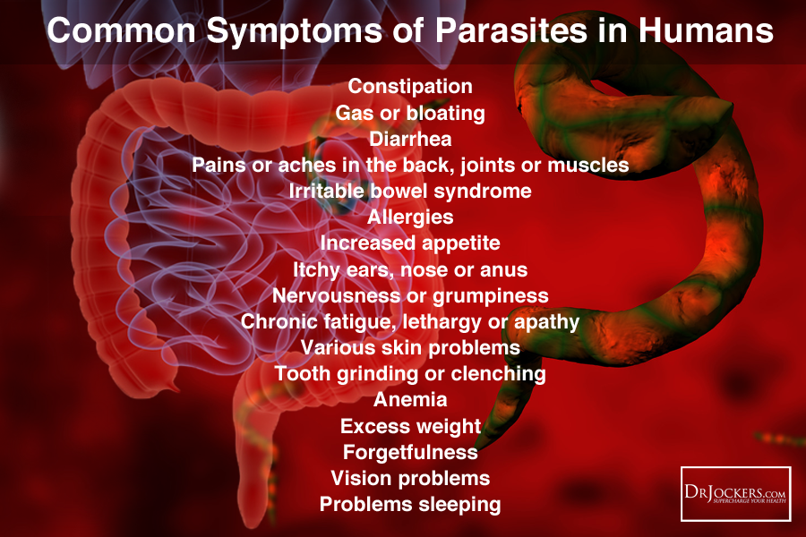 What Type Of Parasites Do You Have Drjockers Com