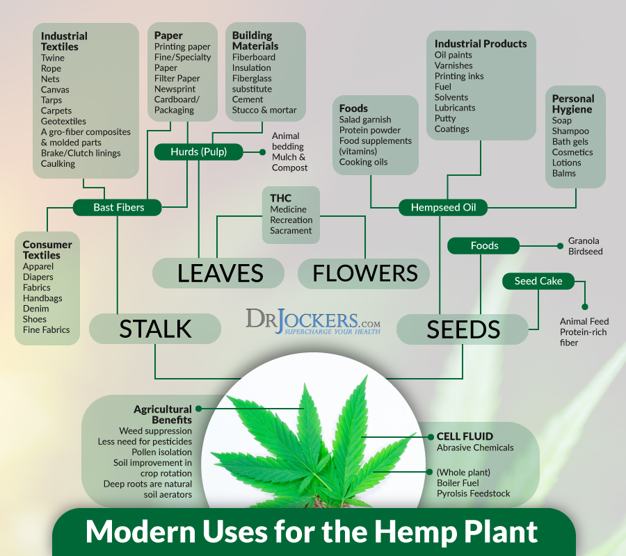 hemp, 9 Reasons to Use Hemp Seed in Your Diet