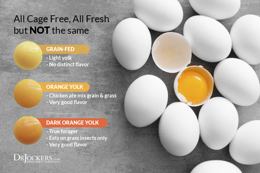 Eggs, 10 Key Health Benefits of Eggs