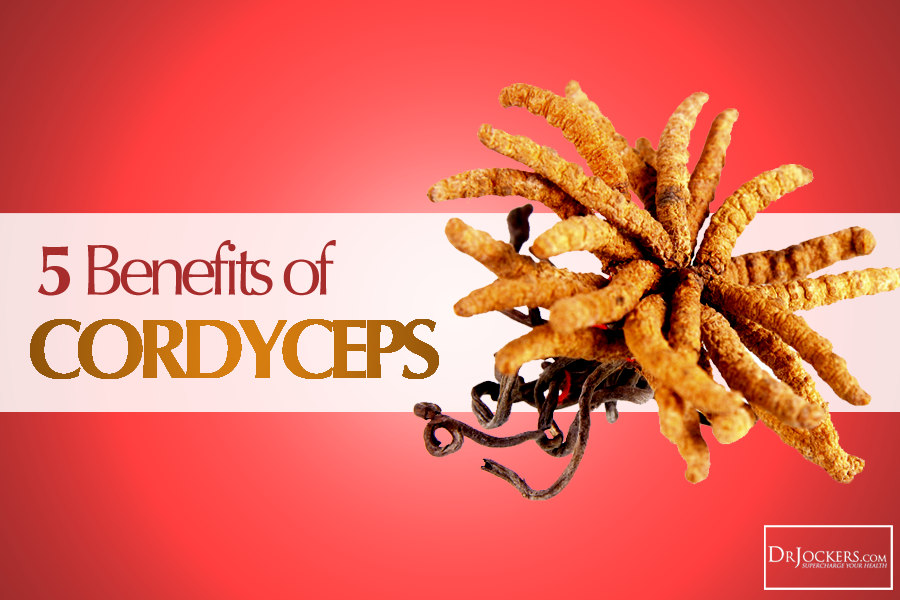 cordyceps, 5 Benefits of Cordyceps For Your Brain and Body