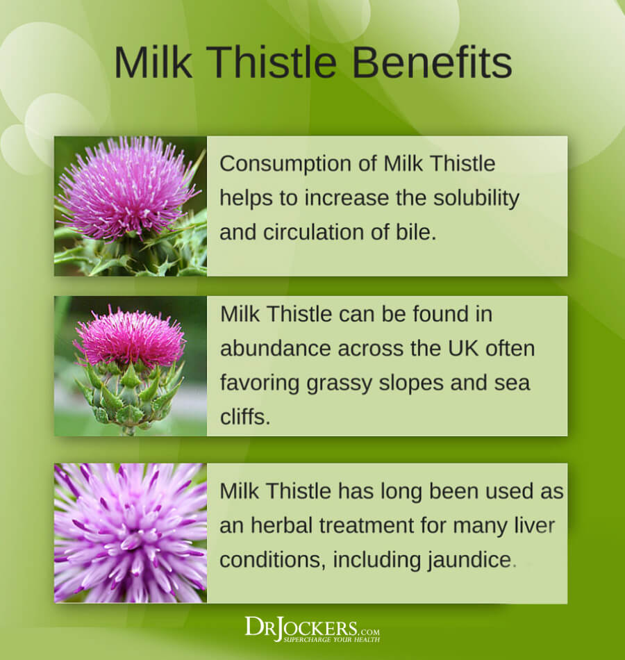 milk thistle, Milk Thistle:  6 Amazing Health Benefits