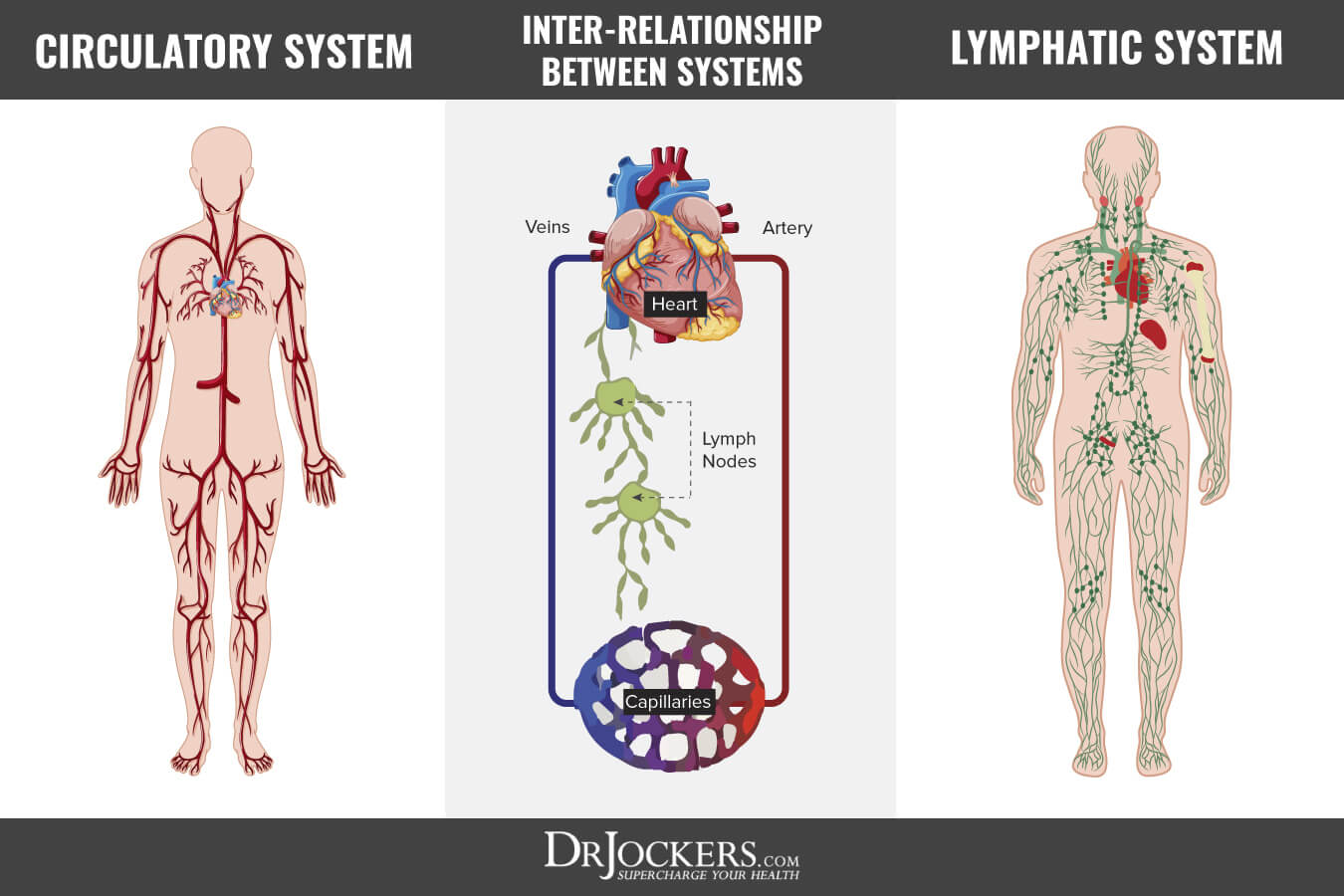 10 Ways To Improve Your Lymphatic System Drjockers Com