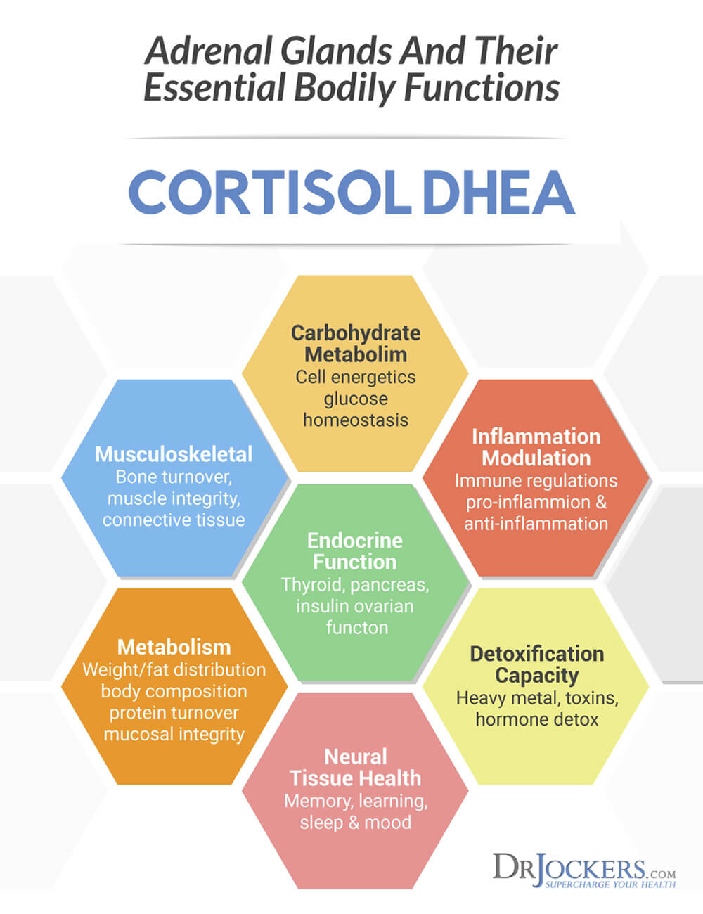 Low Calorie Dieting Increases Cortisol