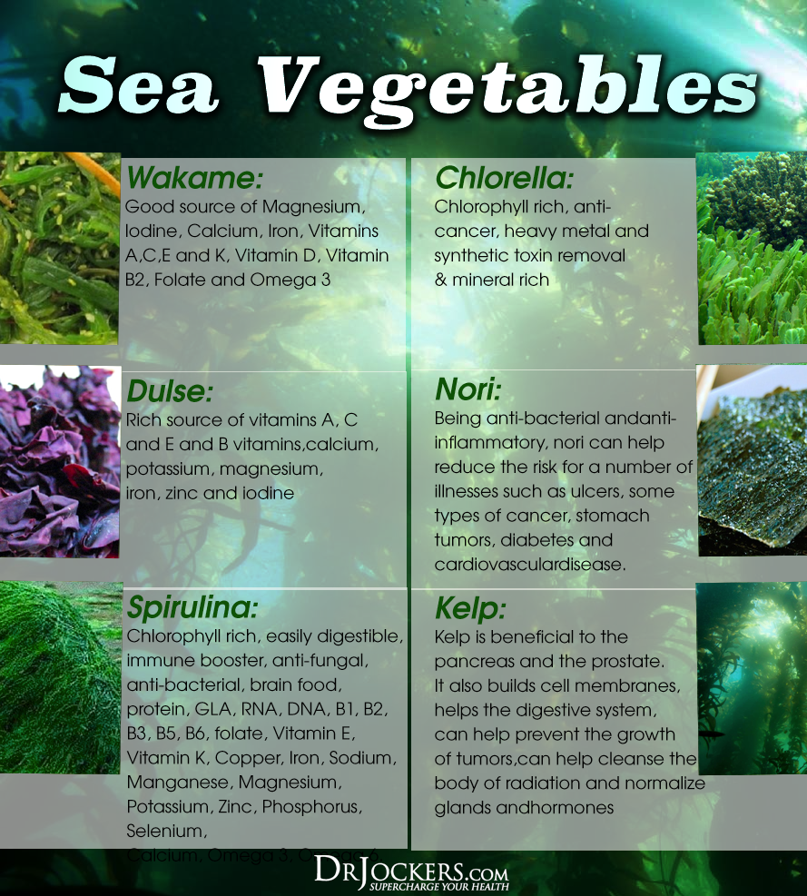 6 major health benefits of sea kelp for energy and metabolism