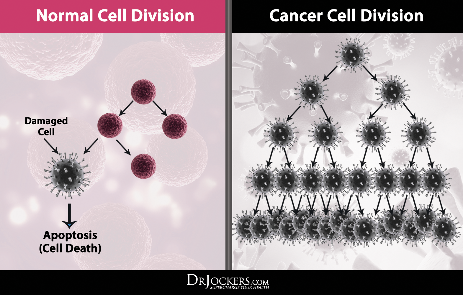 CANCER CELLS AND NORMAL CELLS PDF