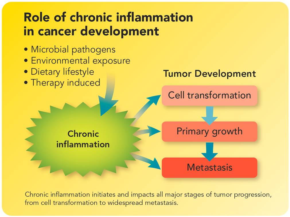 Systemic Enzymes, Systemic Enzymes are a Powerful Immune Support