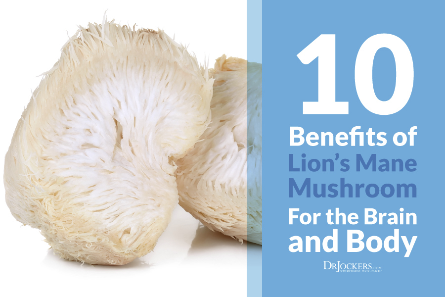 lion's mane, 10 Benefits of Lion's Mane Mushroom