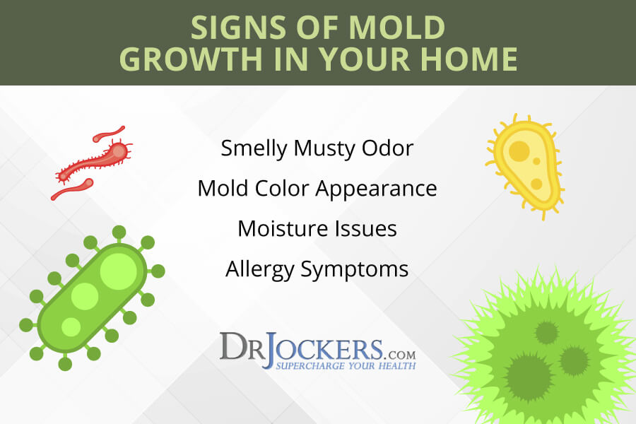 mold exposure, Mold Exposure: Signs of Mold Growth & Health Risks