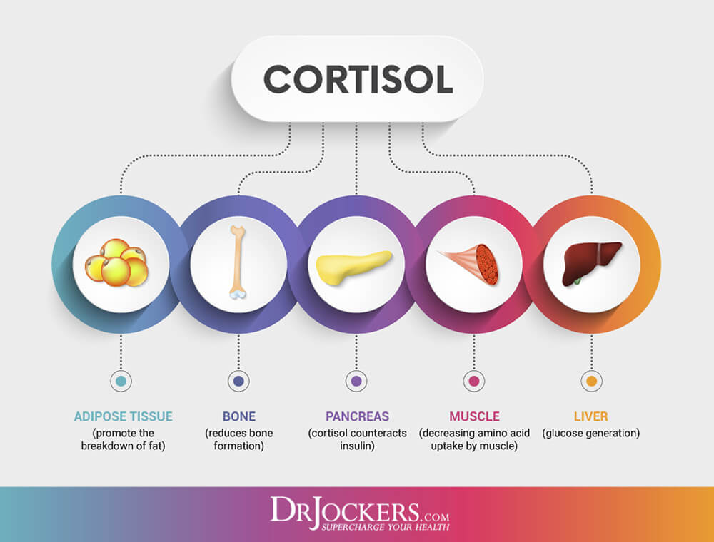 cortisol, 7 Ways To Balance Cortisol Levels