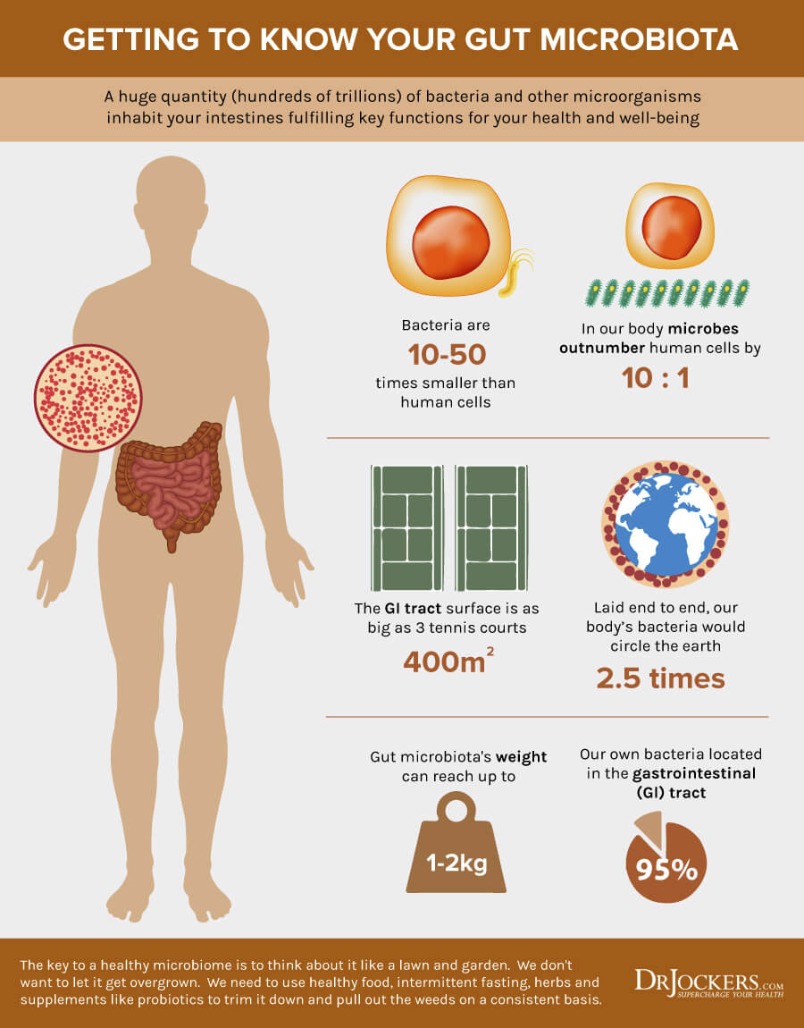 Microbiome, What is the Microbiome and How Does it Impact Our Health?