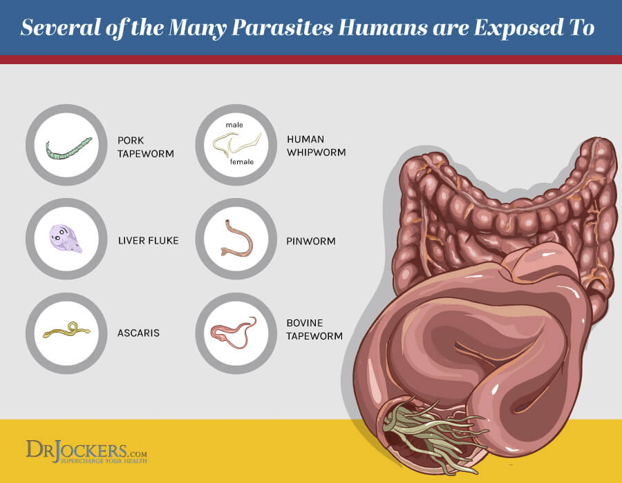 Parasite infections, Parasite Infections: Functional Lab Analysis To Identify Parasites