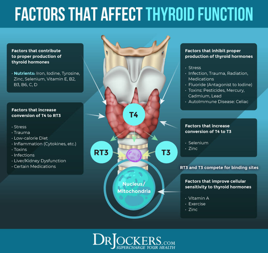 Hashimoto's, Hashimoto's Thyroiditis:  Causes, Symptoms and Support Strategies
