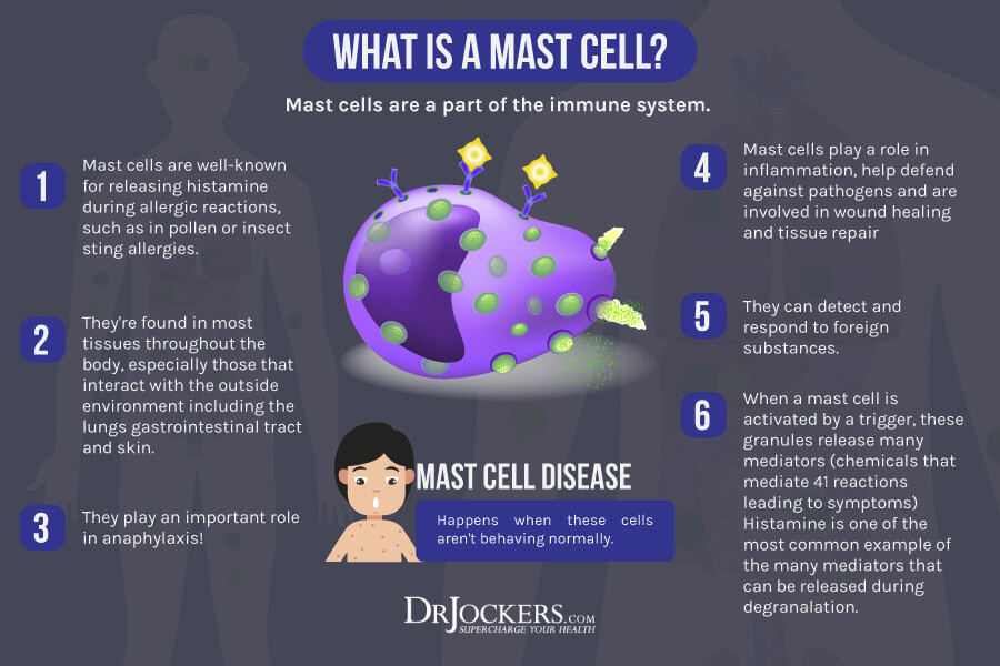 Mast Cell, Mast Cell Activation Syndrome:  Symptoms and Solutions