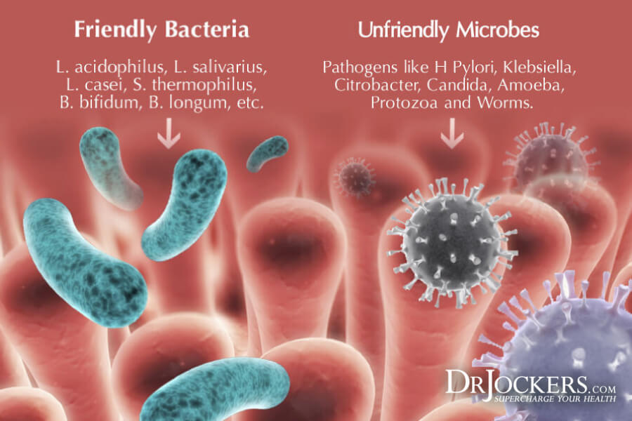 gut Microbiome, 10 Ways To Improve The Gut Microbiome