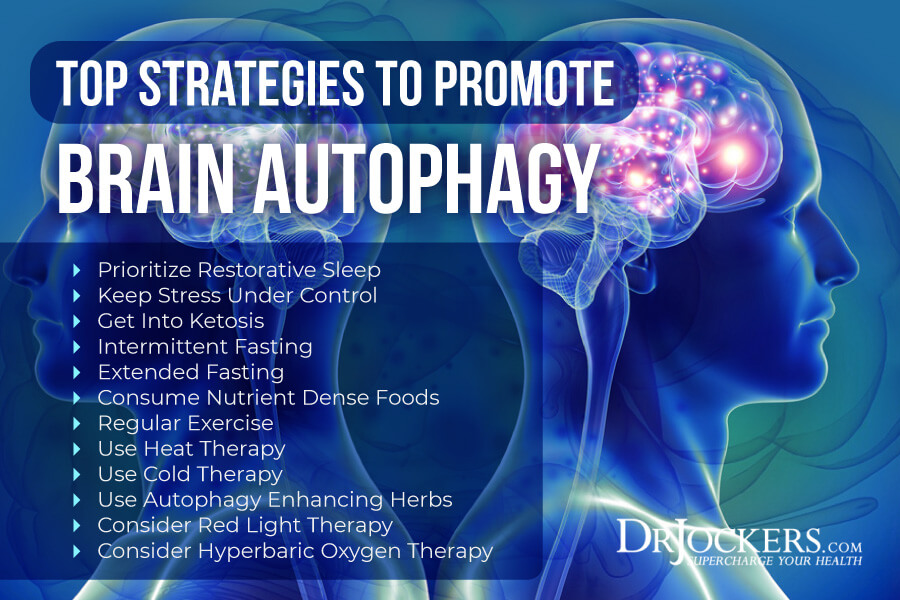 brain autophagy, Brain Autophagy: Healing the Toxic Brain