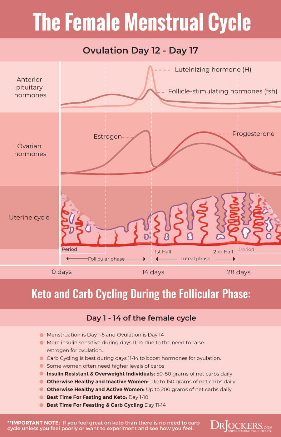 Menstrual Cycle, Menstrual Cycle Optimization with Feast/Famine Cycling
