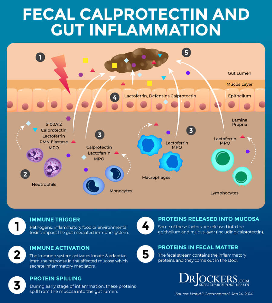 GI MAP, GI MAP Interpretation: Discover The Health of Your Microbiome
