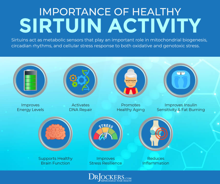 sirtuins, Sirtuins: What Are They and How to Activate Them For Healthy Aging