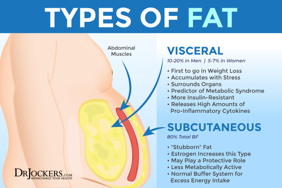 visceral fat, Visceral Fat: What is It and How it Drives Up Inflammation