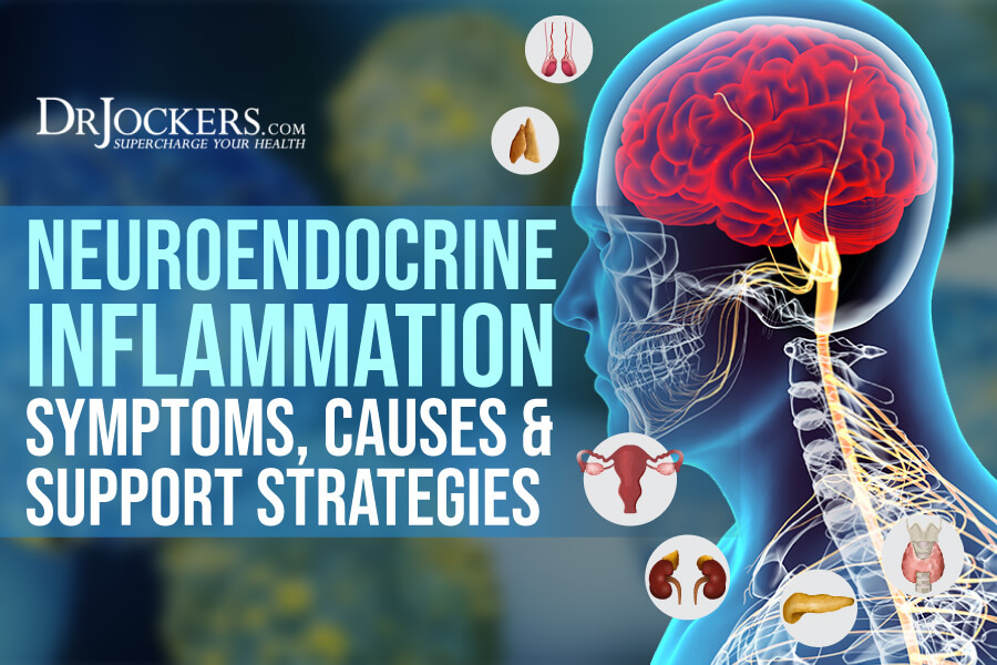 neuroendocrine, Neuroendocrine Inflammation: Symptoms, Causes, and Support Strategies